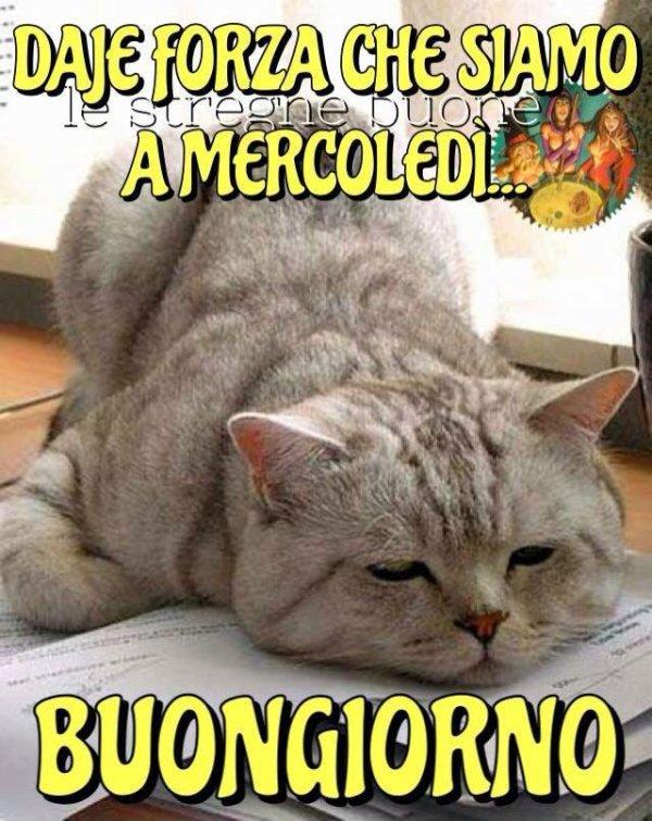 Buon mercoled for Vignette buongiorno divertenti