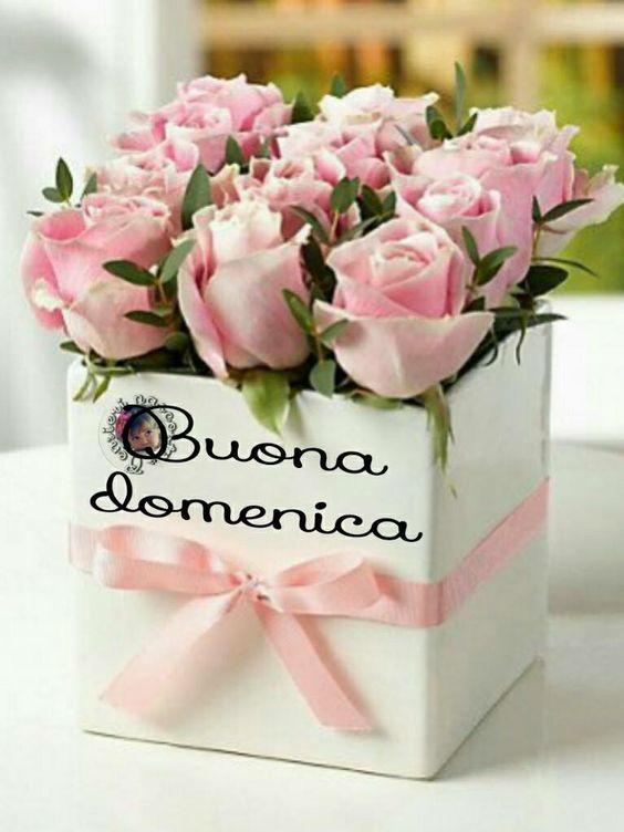 Buona domenica for Foto di rose bellissime