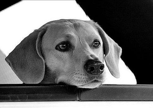 Foto bianco e nero - Pagine a colori in bianco e nero ...