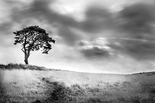 Foto bianco e nero for Disegni bianco e nero paesaggi