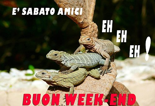 buon-weekend-animali