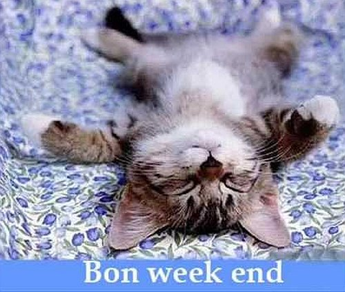 buon-weekend-gatto