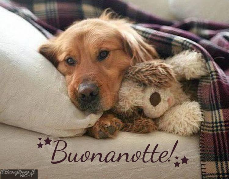 immagine,buonanotte,cane,dolcissimo