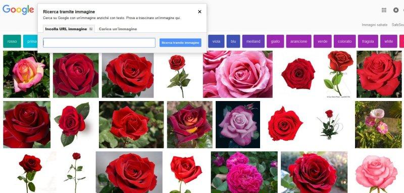 Google immagini ricerca inversa for Ricerca per immagini google